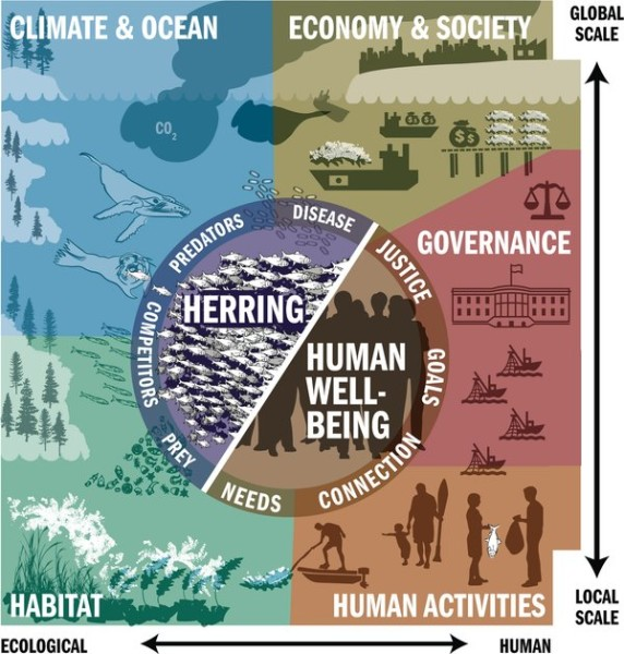 Infographic for Pacific Herring - a tiny and mighty fish